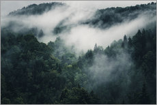 Mystic forests with fog