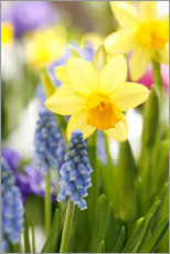 Daffodils, Easter flowers, Easter bells, grape hyacinths, onion plants