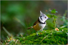 Cute tit standing on the forest ground