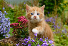 Cute ginger kitten in a flowery garden
