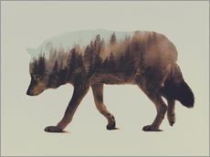 Norwegian Woods The Wolf