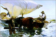 Oxen pulling a fishing boat