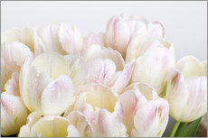 Pastel-colored tulips 06
