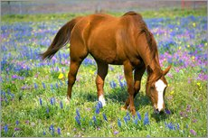 Horse on a meadow with wildflowers