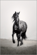 Horse Friesian in the steppe