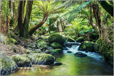Rainforest in Tasmania
