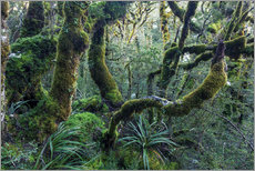 Mossy rainforest of Routeburn track, New Zealand