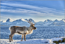 Reindeer in snow covered landscape at sea