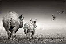 Rhinoceros cow and calf walking away together