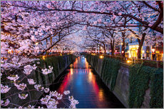 Pink cherry blossoms in Tokyo Japan