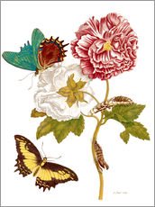 Roses with Lepidoptera Metamorphosis