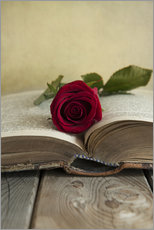 Red rose and old open book