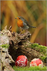 Robin in the fairy forest