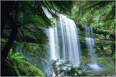 Russell Falls and tree ferns