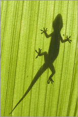 Silhouette of a gecko on a palm frond