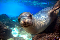 Sea lion underwater portrait