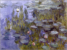 Water Lilies (Nympheas)