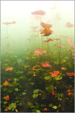 Lily pads underwater