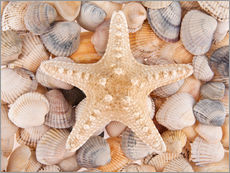 Starfish on cockleshells