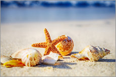 Starfish and sea shells