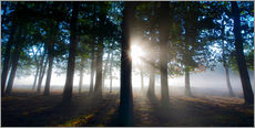 Silhouettes of tree trunks in the autumn mist at dawn