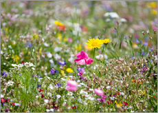 Summer Meadow 2