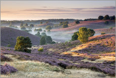 Sunrise over mist and heath