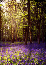 Sunny bluebell wood
