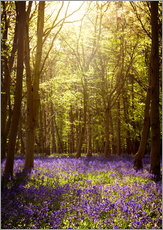 Sunny forest with bluebells