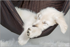 Sweet dreams golden retriever