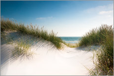 Dune with shiny marram grass