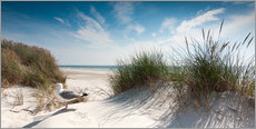 Sylt - Dune with fine beach grass and seagull