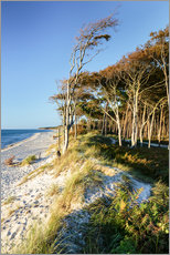 Baltic Sea beach with trees