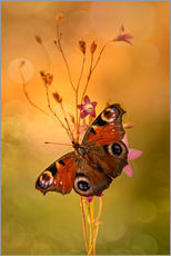 Peacock butterfly on bell flowers