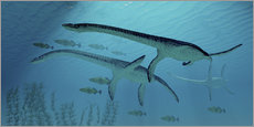 Three Plesiosaurus dinosaurs migrate with a school of fish.