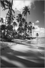 Tropical palm trees on a Brazilian beach in black and white