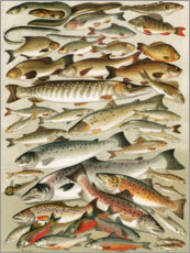Our British Fresh Water Fish