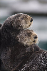 Cuddly otters