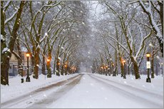 Snow covered avenue