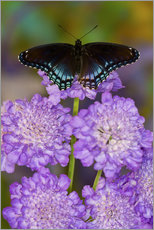 Violet flowers with butterfly