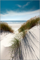 Dunes with fine beach grass