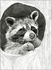 Raccoon In A Hollow Tree Sketch