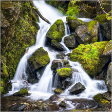 Waterfall in the forest near Triberg, Black Forest