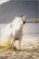 White Horse in the morning light on the beach