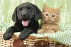 Puppy and kitten in green gingham