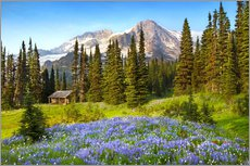 Wildflowers and hut under the summit of Mount Rainier