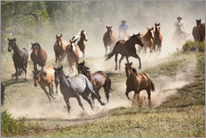 Horses running during roundup