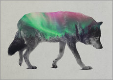 wolf in the aurora borealis