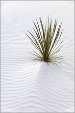 Yucca plant on a sand dune