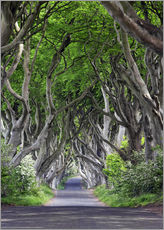 Dark Hedges in Ireland